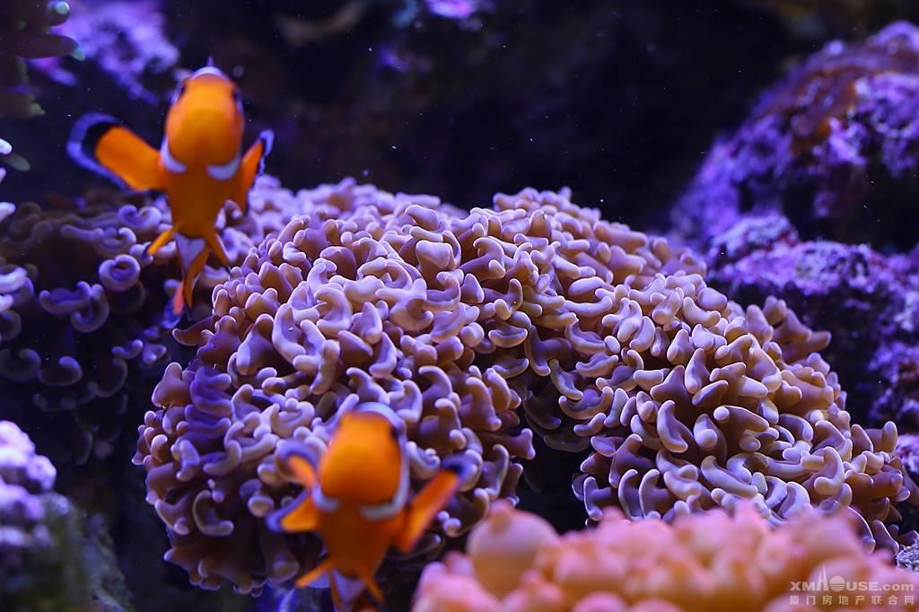 2016年我拍摄的海底珊瑚作品