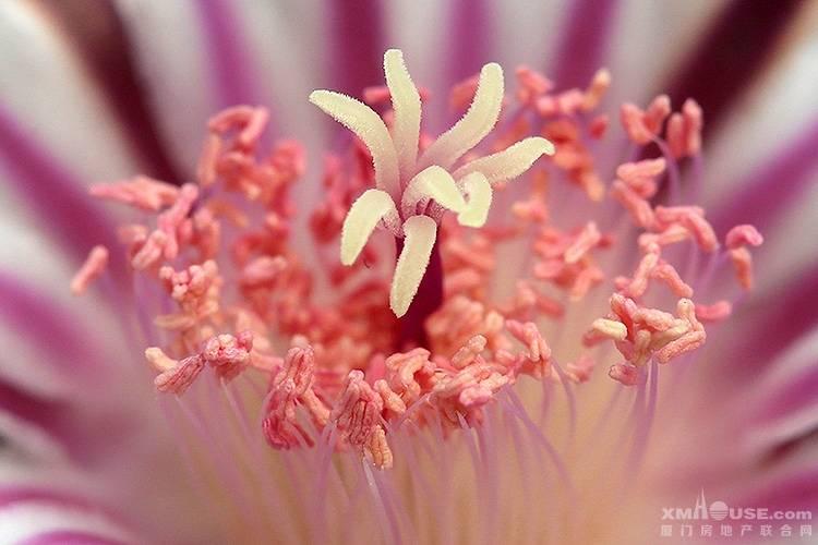 美丽的多肉植物花