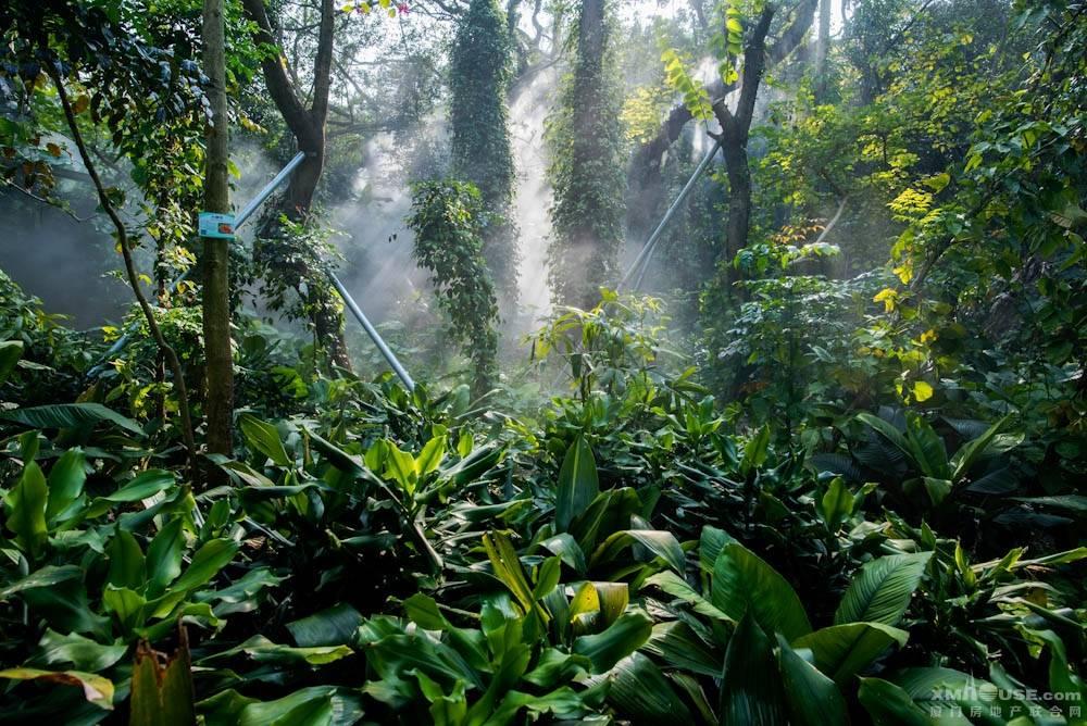 厦门园林植物园热带雨林-5.jpg