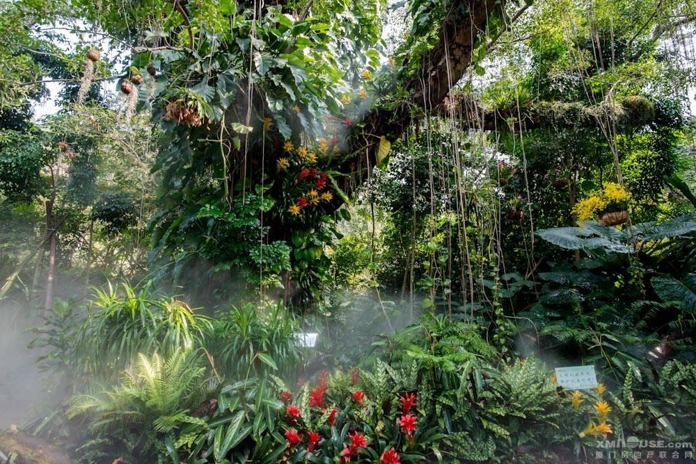 厦门园林植物园热带雨林-8.jpg