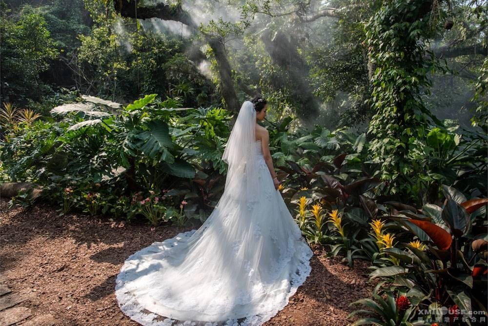 厦门园林植物园热带雨林-9.jpg