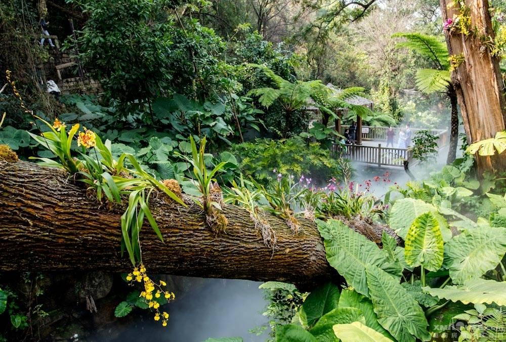 厦门园林植物园热带雨林-10.jpg