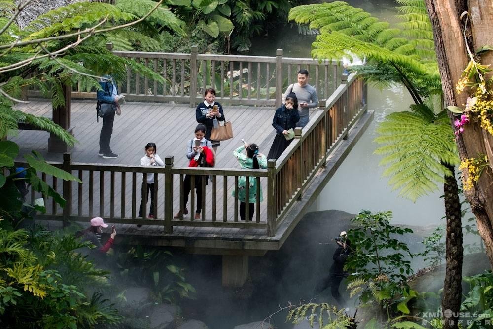厦门园林植物园热带雨林-17.jpg