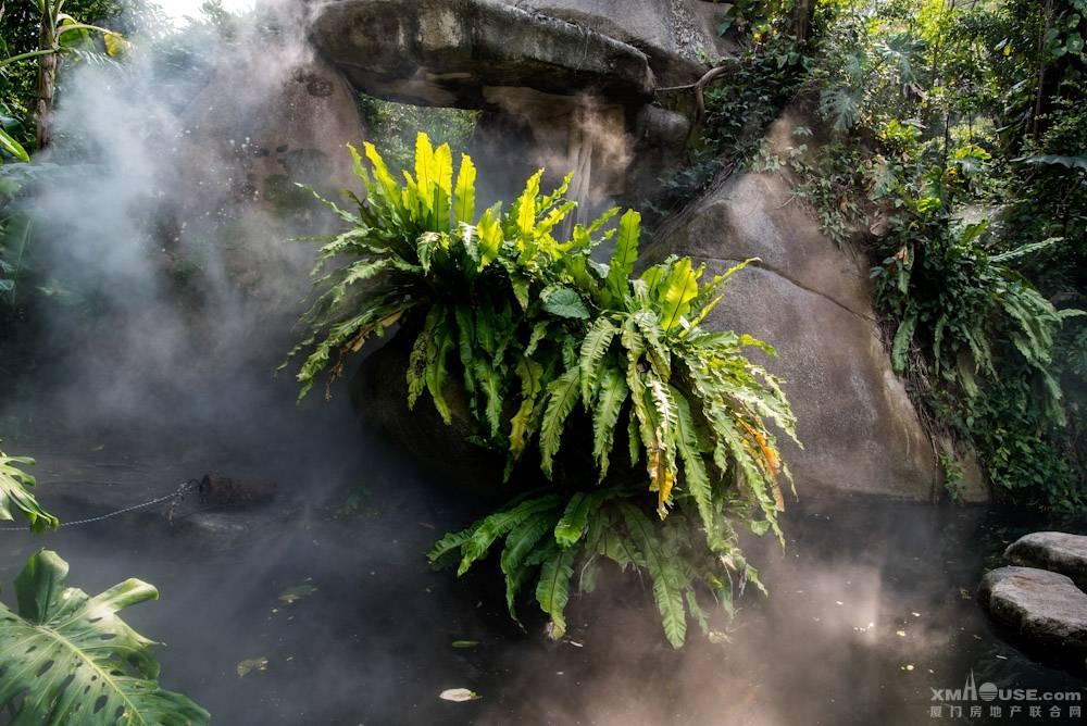厦门园林植物园热带雨林-19.jpg