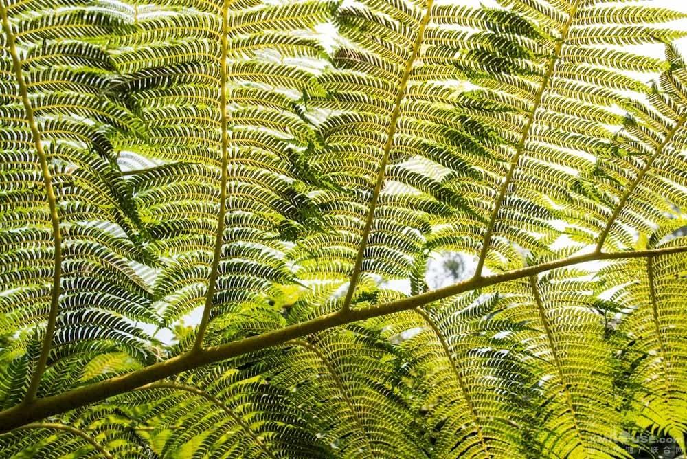 厦门园林植物园热带雨林-21.jpg