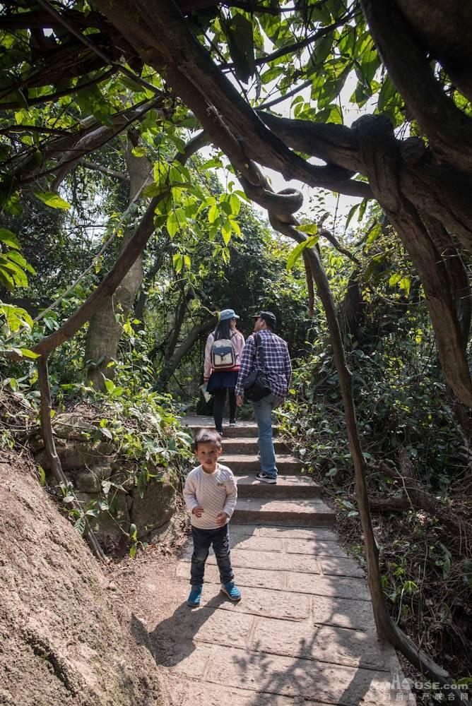 厦门园林植物园热带雨林-22.jpg