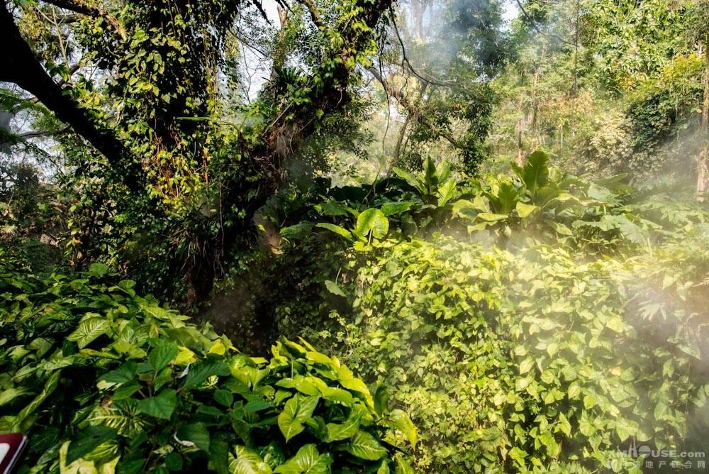 厦门园林植物园热带雨林-25.jpg