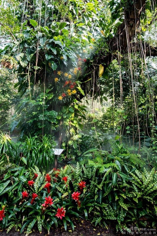 厦门园林植物园热带雨林-30.jpg